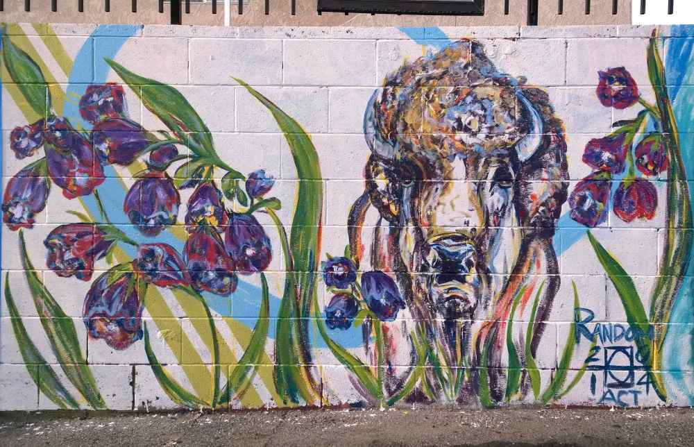 Painted in celebration of Comfrey Jacobs and his saving the LAST WILD BUFFALO of Yellowstone Park.