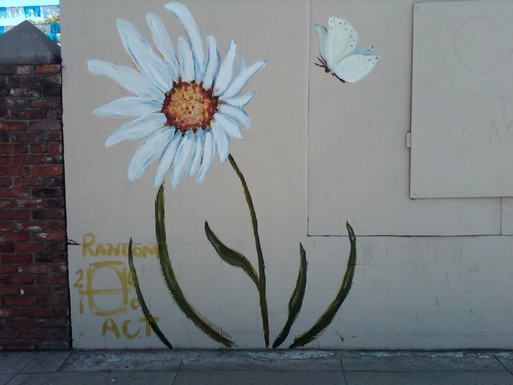 daisy on sm 2009 a LaHue